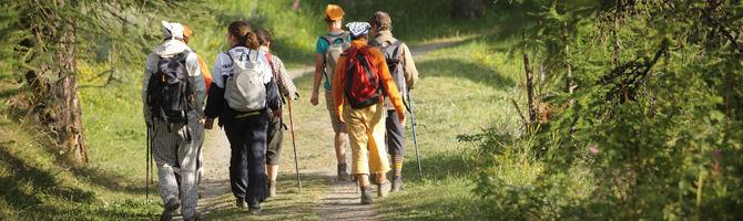 Caminata Patrocinada Freesia